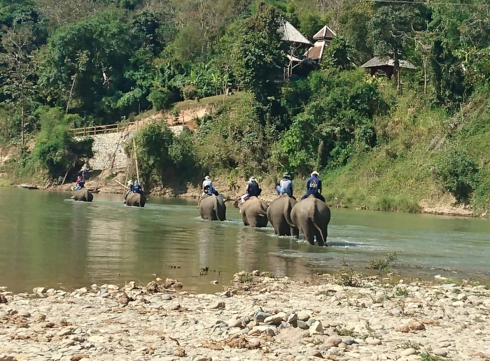 Elephants wading through the Nam Khan river in Laos