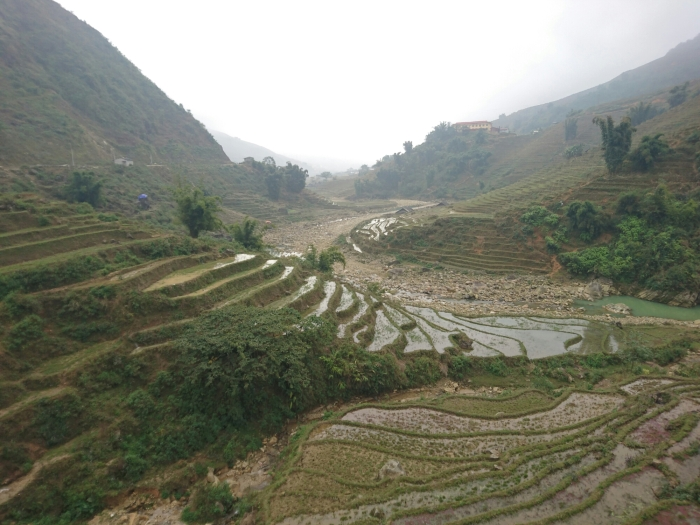 Shimmering green rice terraces in the hills outside Sapa, northern Vietnam