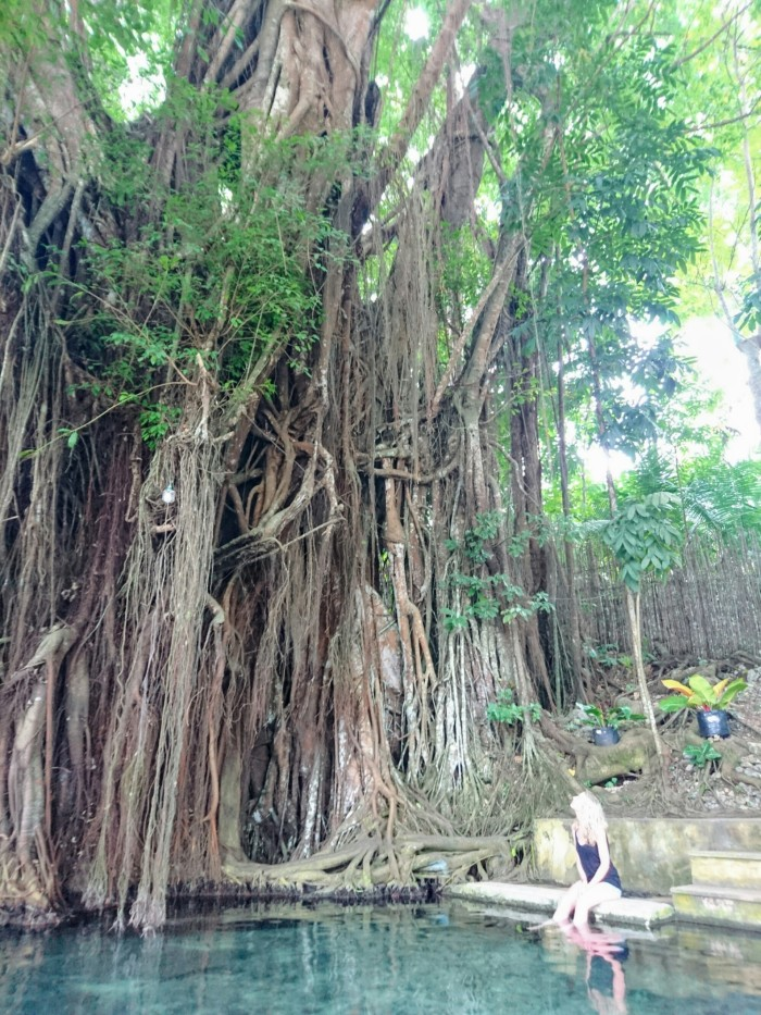 The Old Enchanted Balete Tree, in Siquijor, the Philippines