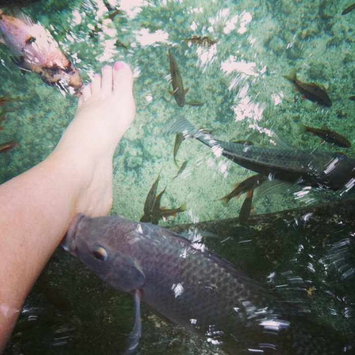 Foot being nibbled by fish in a fish pool at the Old Enchanted Balete Tree