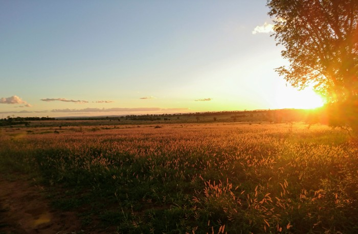 Sunset on Myella Farm, Australia