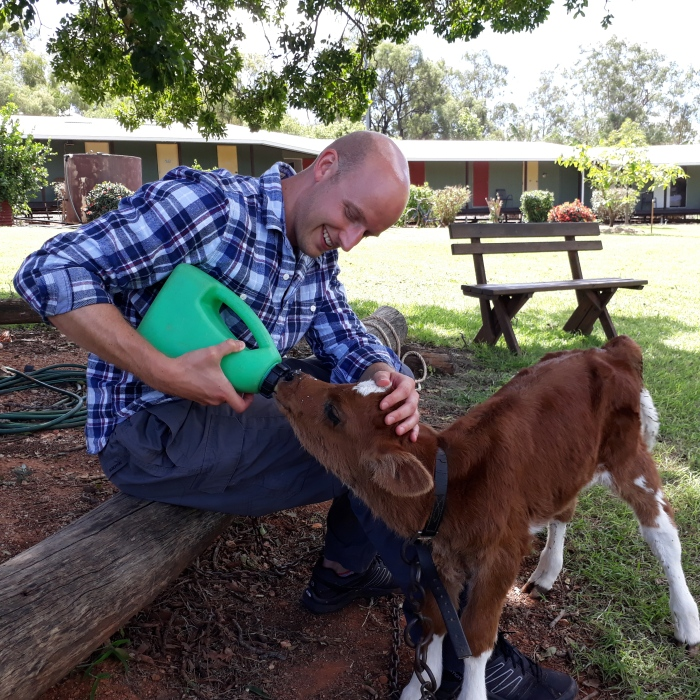 Man bottle feeds calf on Myella Farm in Australia