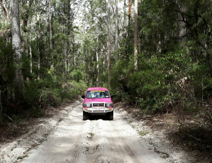 4WD driving through rainforest on Fraser Island, Australia