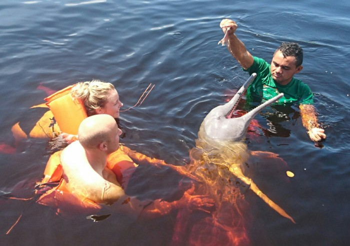 Couple swimming with pink river dolphins in the Amazon jungle