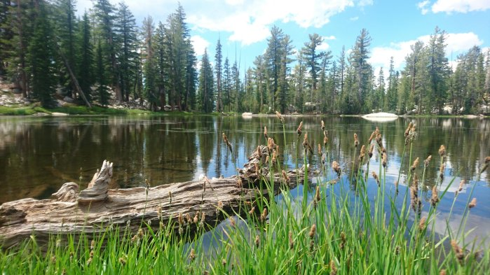 Lake and trees landscape in Yosemite National Park, USA