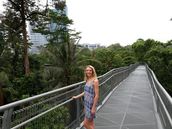 Walking along the Southern Ridges treetop canopy walk