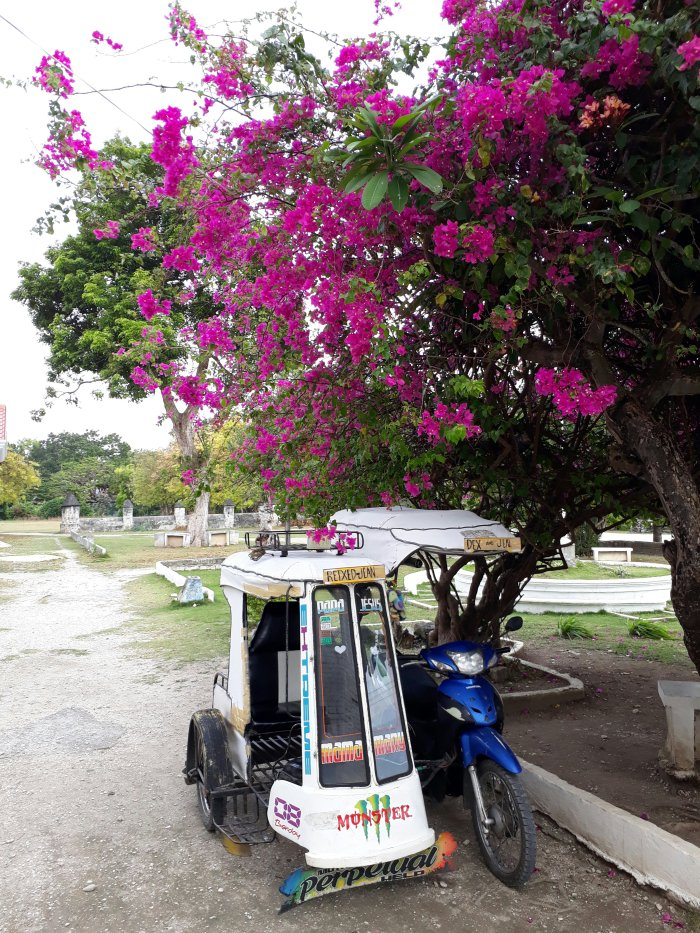 A tricycle parked up beneath a colourful tree in Oslob, Cebu, the Philippines