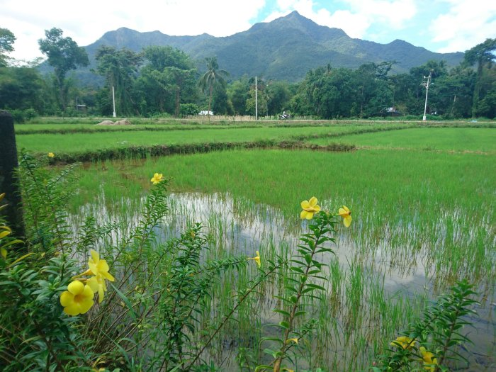 Mountains and jungle in Sabang, Palawan, the Philippines